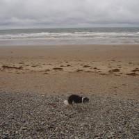 Large dog-friendly beach and walk near Harlech, Wales - Dog walks in Wales