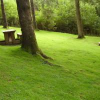 Dog walk near Machynlleth, Wales - Dog walks in Wales