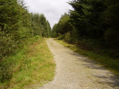 Forest dog walk and no sheep in Snowdonia, Wales - Driving with Dogs