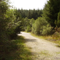 Forest dog walk and no sheep in Snowdonia, Wales - Dog walks in Wales
