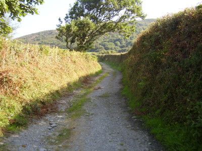 Coastal dog walk with dog-friendly pub stop, Wales - Driving with Dogs