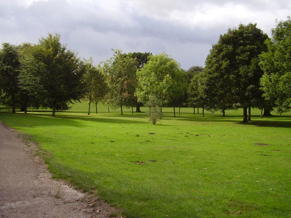 Woodland dog walk near Nottingham centre, Nottinghamshire - Dog walks in Nottinghamshire