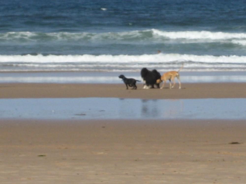 A98 dog-friendly beach at Cullen, Scotland - Dog walks in Scotland