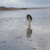 Dog-friendly beach near Eastbourne, East Sussex - Dog-friendly beach Sussex.JPG