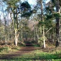 Bunkers Wood dog walk near Stourbridge, West Midlands - Dog walks in the West Midlands