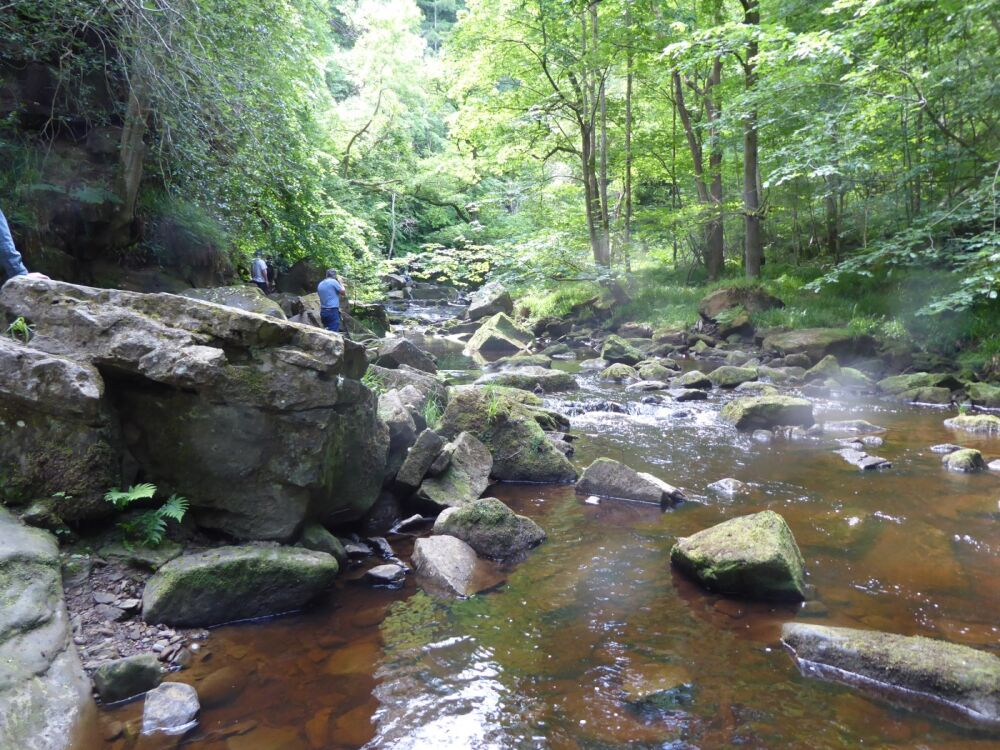 Dog-friendly cafes, pubs and dog walk with swimming, North Yorkshire - Yorkshire dog walks with tea rooms