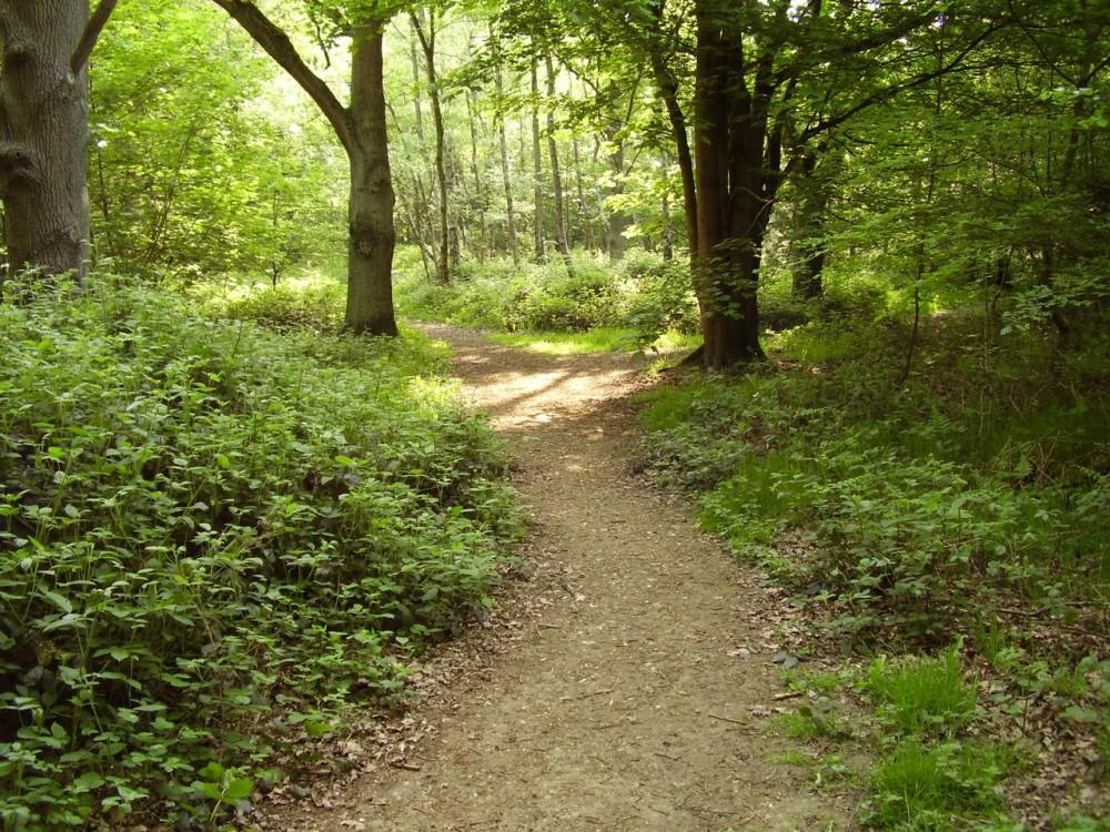 A1M Junction 4 forest dog walks, Hertfordshire - Dog walks in Hertfordshire