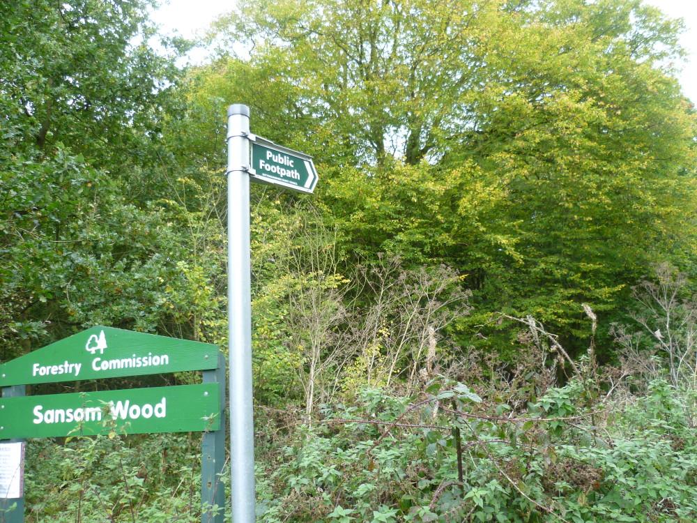 Woodland dog walk near Ravenshead, Nottinghamshire - Image 1