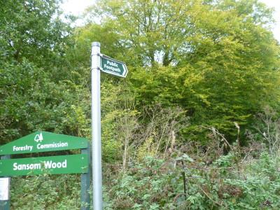 Woodland dog walk near Ravenshead, Nottinghamshire - Driving with Dogs
