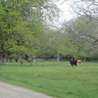 Feudal village and excellent tea shops, Norfolk - Dog-friendly pub and dog walk in Norfolk