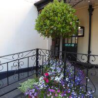 A697 Traditional coaching inn and dog walk, Northumberland - Northumberland dog-friendly pub and dog walk