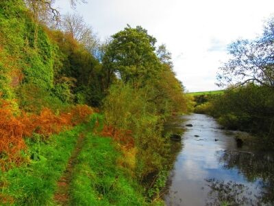 River walk and dog friendly pub - A199, Scotland - Driving with Dogs