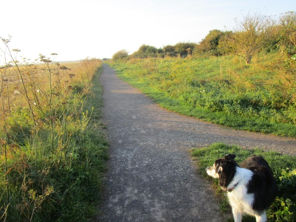 Saxon Shore Way dog walks, Kent - Dog walks in Kent