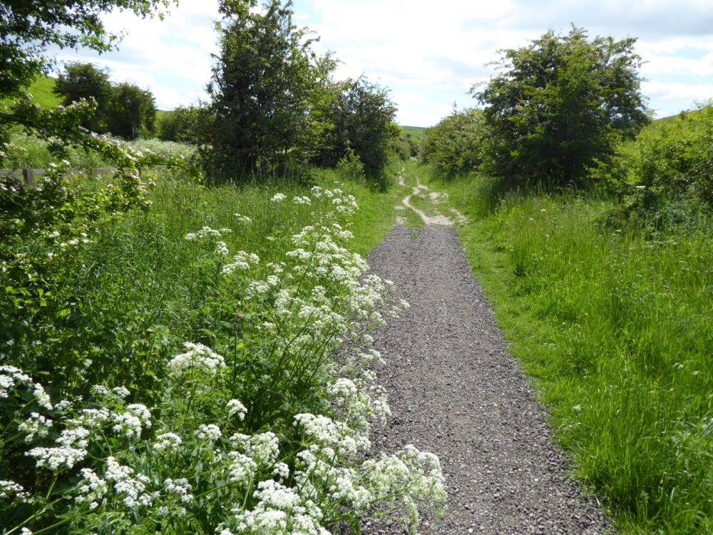 Accessible walk on a former rail line near Market Weighton, East Yorkshire - Accessible dog walks in Yorkshire