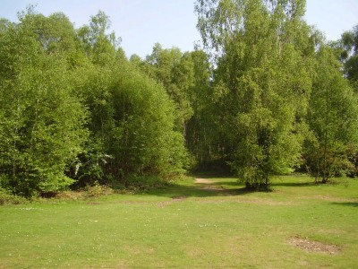 A1M Junction 6 dog walk and pub, Hertfordshire - Driving with Dogs