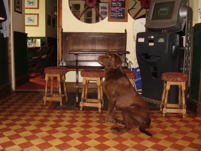 A30 Dog-friendly pub with dog walks nr Okehampton, Devon - Driving with Dogs