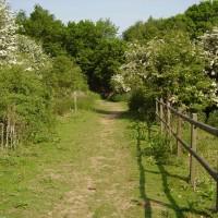 A1M Junction 6 dog walk and pub, Hertfordshire - Dog walks in Hertfordshire