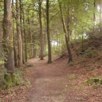 Tynybedw dog walk near Aberystwyth, Wales - Dog walks in Wales