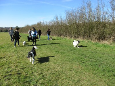 Berkhamsted dog walks, Hertfordshire - Driving with Dogs