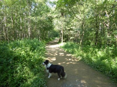 A69 Woodland dog walk near Brampton, Cumbria - Driving with Dogs