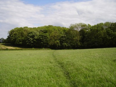 A1M Junction 45 dog-friendly pub and dog walk, West Yorkshire - Driving with Dogs