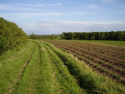 A1M Junction 46 dog walk near Bilton, North Yorkshire - Driving with Dogs