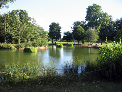 Victoria Park local dog walks, Greater London - Driving with Dogs
