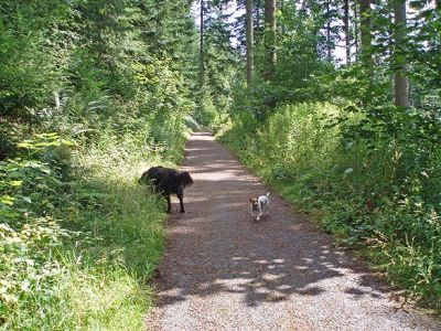 Woodland dog walk and lake view, Cumbria - Driving with Dogs