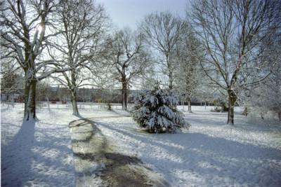Pitshanger Park, Ealing, Greater London - Driving with Dogs