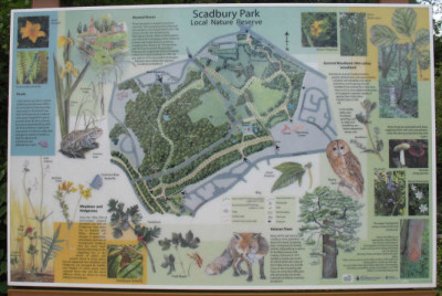Scadbury Park on-lead local dog walk, Kent - Driving with Dogs