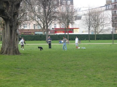 Hyde Park local dog walks, Greater London - Driving with Dogs