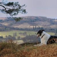 Cambusbarron dog walk near Stirling, Scotland - Dog walks in Scotland