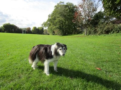 Dog walk near Reading, Berkshire - Driving with Dogs