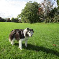Dog walk near Reading, Berkshire - Berkshire dog walk