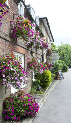 Lovely dog-friendly pub and dog walks near Berkhamstead, Hertfordshire - Driving with Dogs