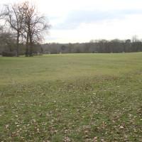 M25 Junction 19 dog walk near Watford, Hertfordshire - Dog walks in Hertfordshire