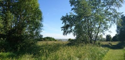 Riverside park and dog-friendly pub, Essex - Driving with Dogs