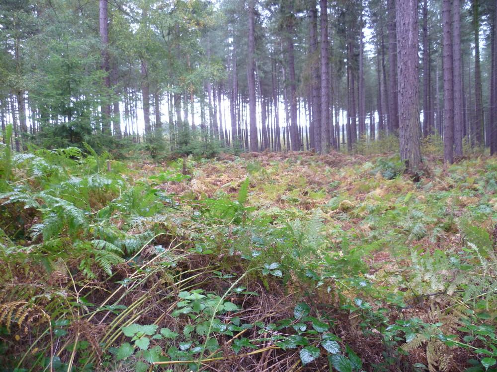 Carnagh Forest dog walk, NI - Dog walks in Northern Ireland