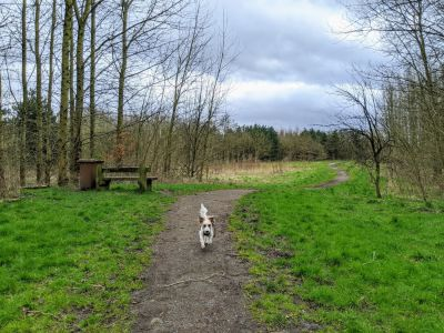 Local Dog Walk: Wheatacre Woods, Lancashire - Driving with Dogs