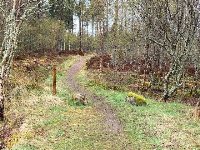 Skelbo Forest dog walk, Scotland - Skelbo 2.jpg
