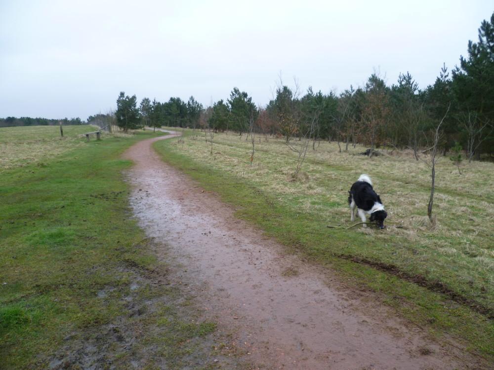 A617 Woodland dog walks, Nottinghamshire - Image 4