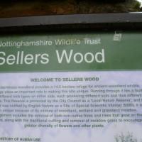 Sellers Wood, Nottingham, Nottinghamshire - Image 1