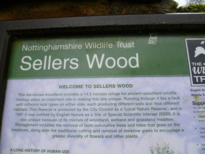 Sellers Wood, Nottingham, Nottinghamshire - Driving with Dogs
