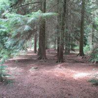 A358 Dog-friendly pub and dog walk, Somerset - dog walk in the forest.JPG
