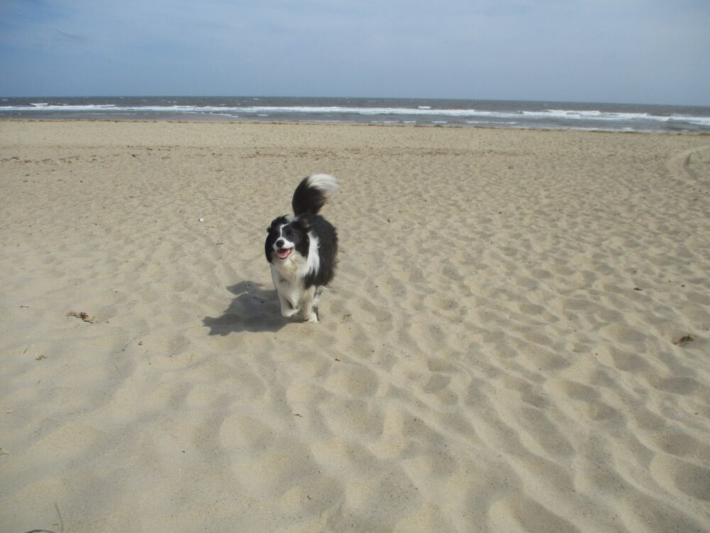 Winterton on Sea dog-friendly beach, Norfolk - IMG_5204.JPG