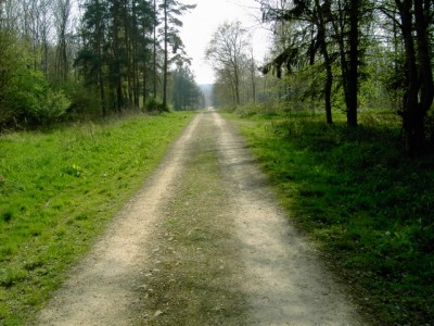 Chicksands Wood dog walk, Bedfordshire - Driving with Dogs
