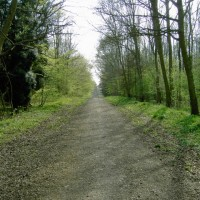 Chicksands Wood dog walk, Bedfordshire - Dog walks in Bedfordshire