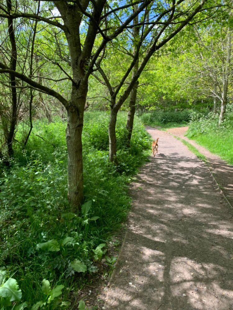 Forfar Loch dog walk, Scotland - 389BA826-56F4-44CA-BDAA-07B00D3EC44A.jpeg