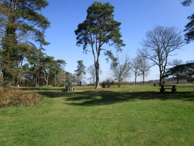 A3 Country Park dog walks, Surrey - Driving with Dogs