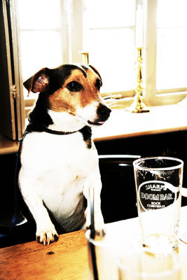 Dog-friendly pub, dog walks and holiday cottage, Somerset - Driving with Dogs